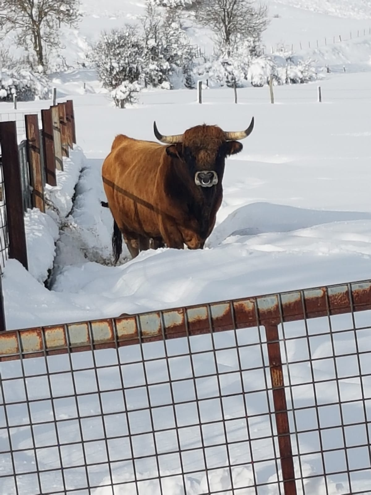 Nieve - Ganaderia Benéitez
